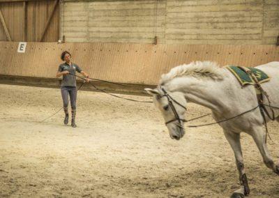 Centre Equestre Chevaux Geneve
