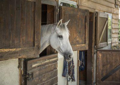 Cours equitation Chevaux Geneve