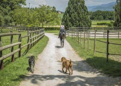 Cours prives Chevaux Geneve